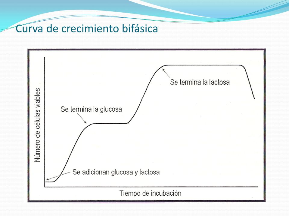 Curva de crecimiento bifásica