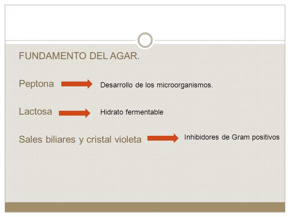 FUNDAMENTO DEL AGAR. Peptona Lactosa Sales biliares y cristal violeta