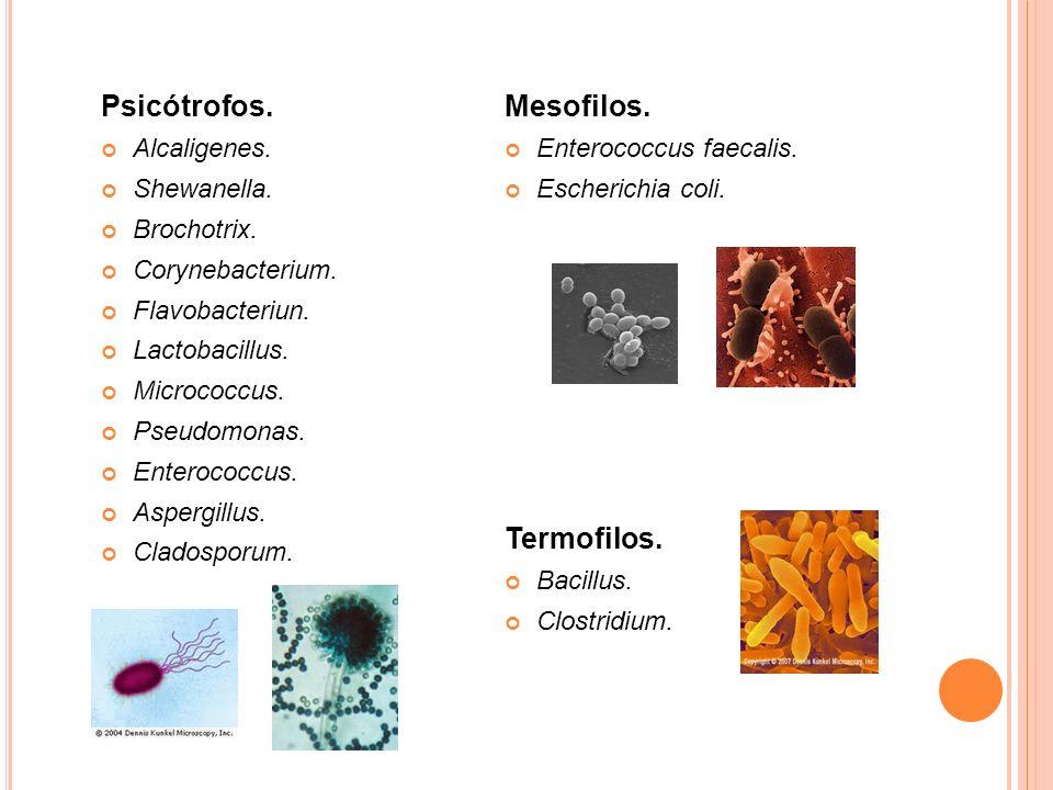 Psicótrofos. Mesofilos. Termofilos. Alcaligenes. Shewanella.