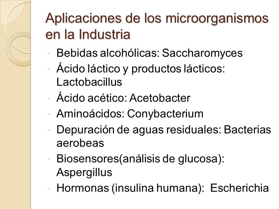 Aplicaciones de los microorganismos en la Industria