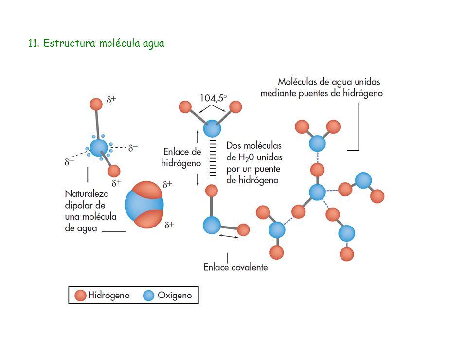 11. Estructura molécula agua