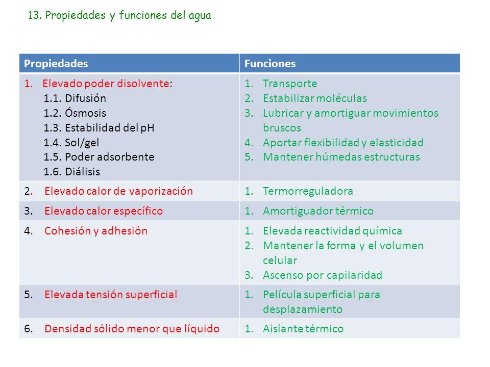13. Propiedades y funciones del agua