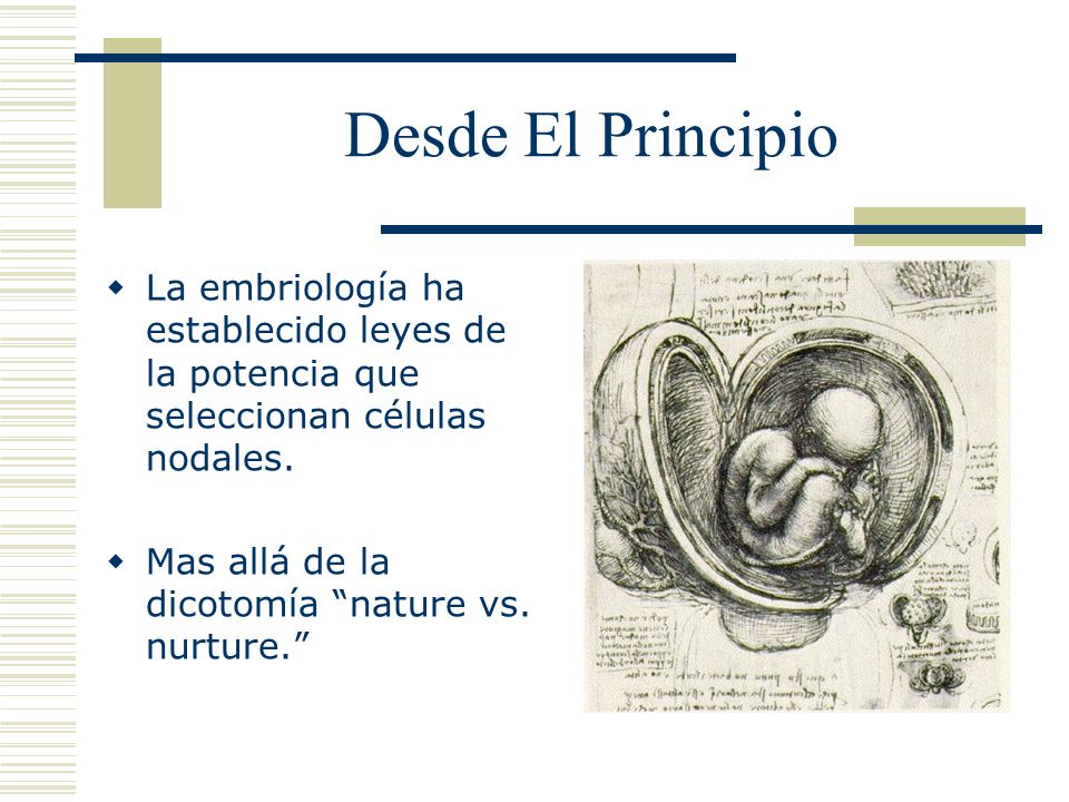 Desde El Principio La embriología ha establecido leyes de la potencia que seleccionan células nodales.