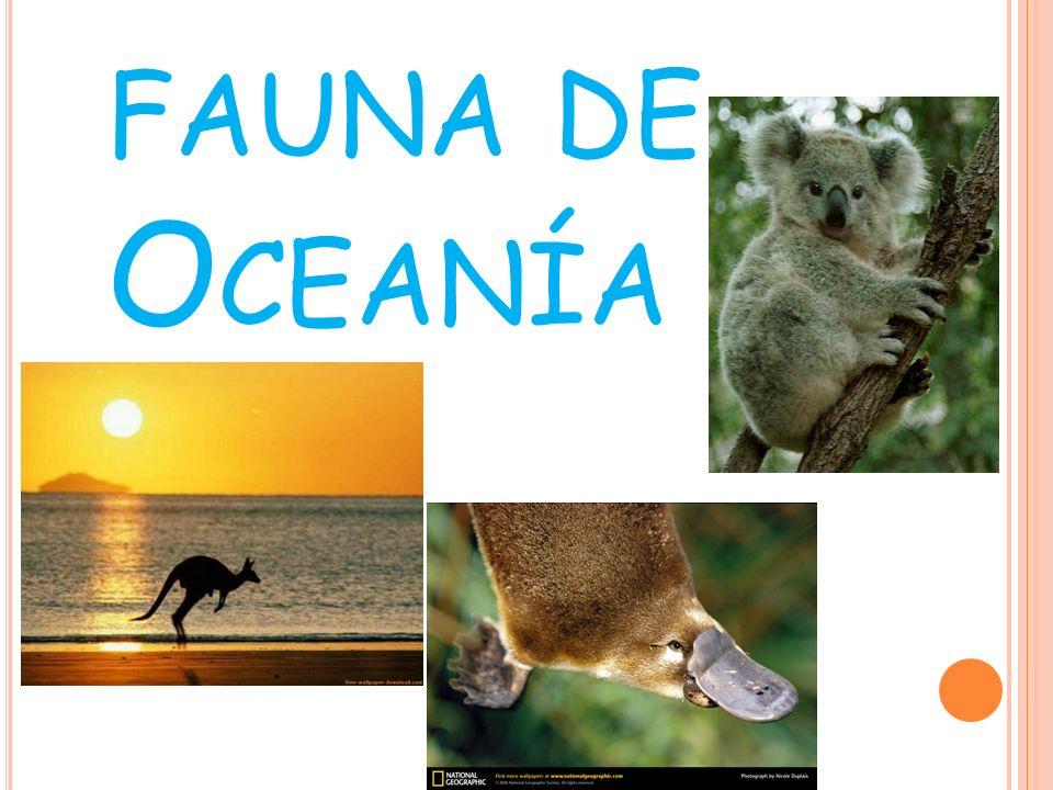 fauna de Oceanía