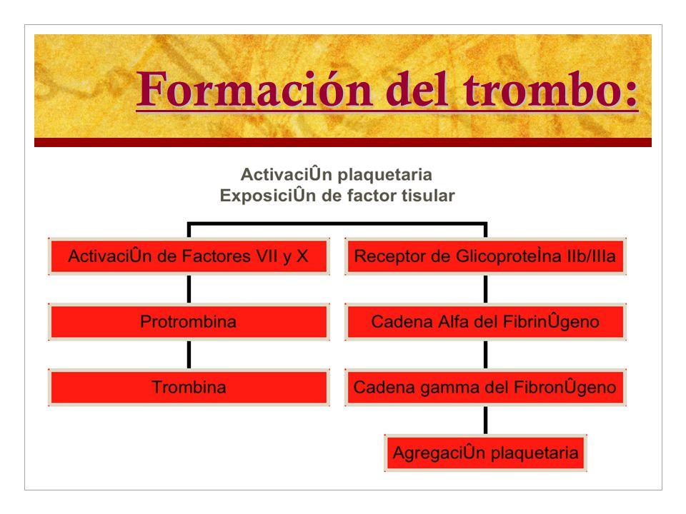 Formación del trombo:
