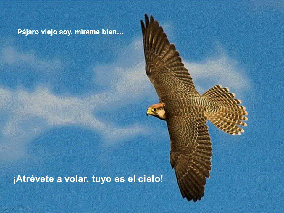 ¡Atrévete a volar, tuyo es el cielo!