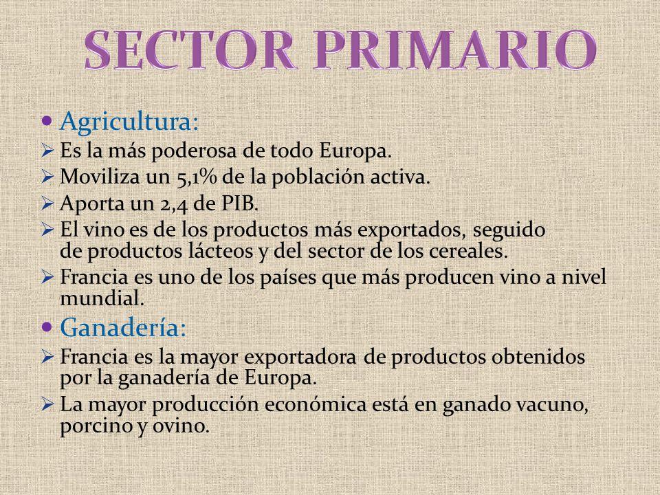 SECTOR PRIMARIO Agricultura: Ganadería: