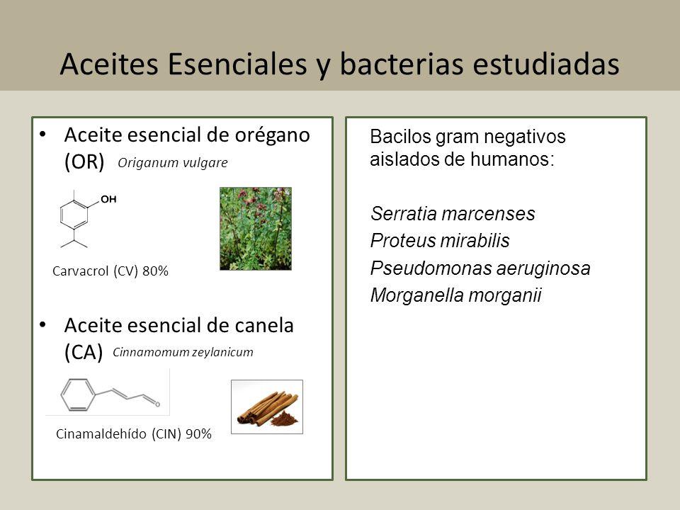 Aceites Esenciales y bacterias estudiadas