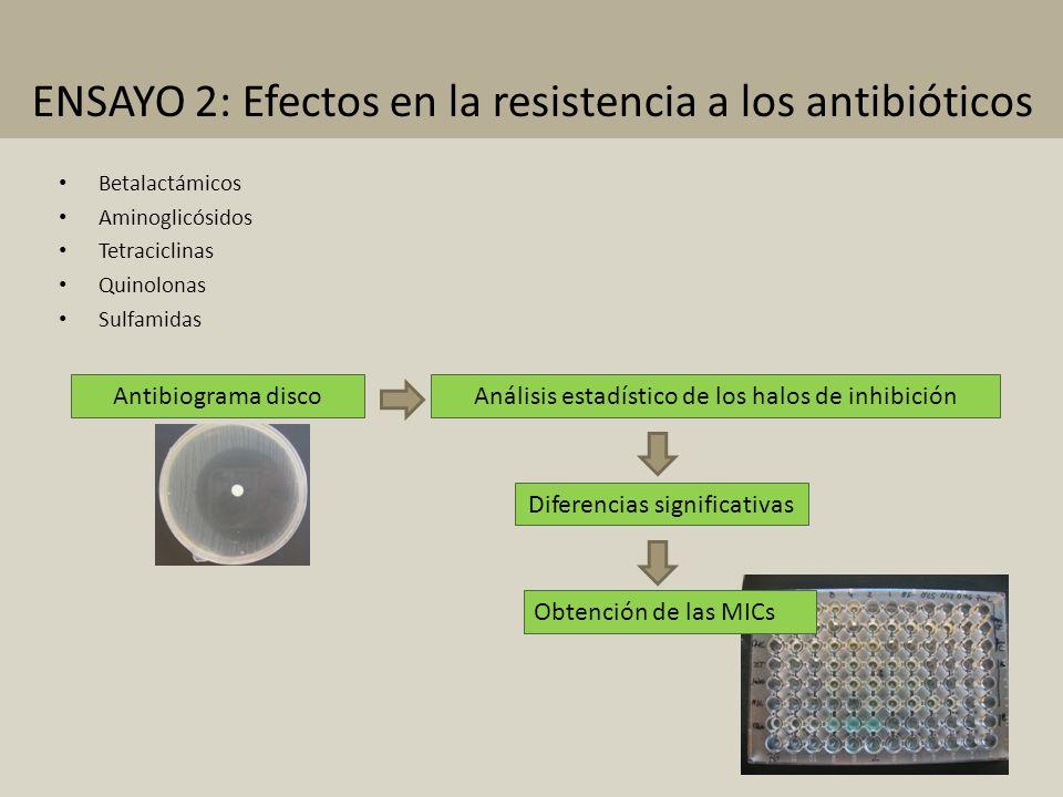 ENSAYO 2: Efectos en la resistencia a los antibióticos