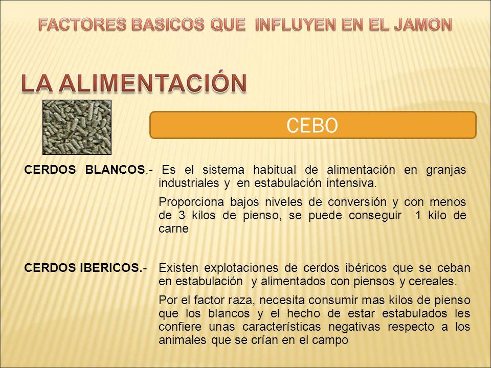 CEBO CERDOS BLANCOS.- Es el sistema habitual de alimentación en granjas industriales y en estabulación intensiva.