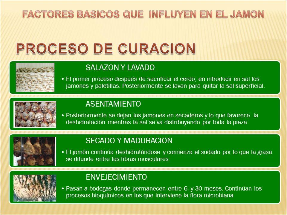 SALAZON Y LAVADO ASENTAMIENTO SECADO Y MADURACION ENVEJECIMIENTO