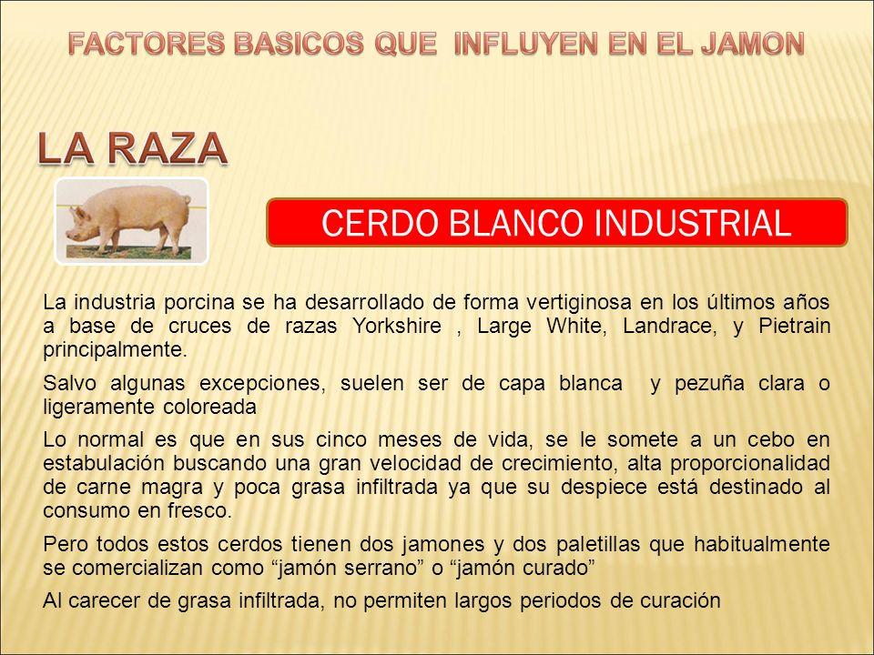 CERDO BLANCO INDUSTRIAL