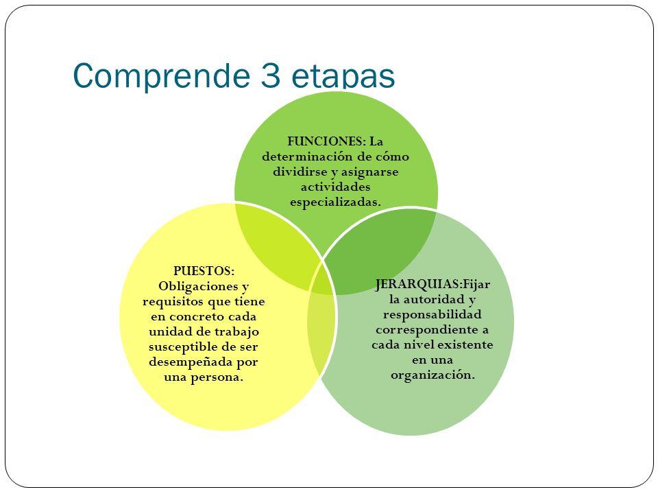 Comprende 3 etapas FUNCIONES: La determinación de cómo dividirse y asignarse actividades especializadas.
