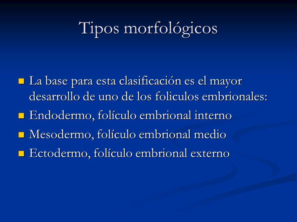 Tipos morfológicos La base para esta clasificación es el mayor desarrollo de uno de los foliculos embrionales: