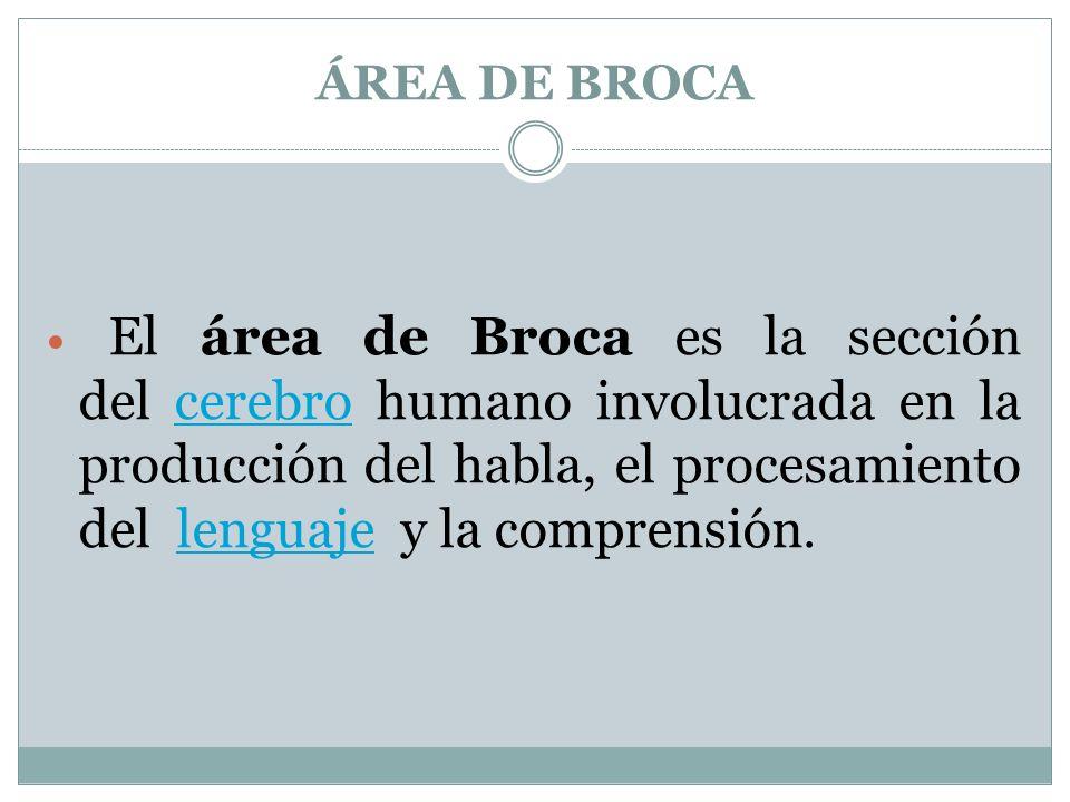 ÁREA DE BROCA
