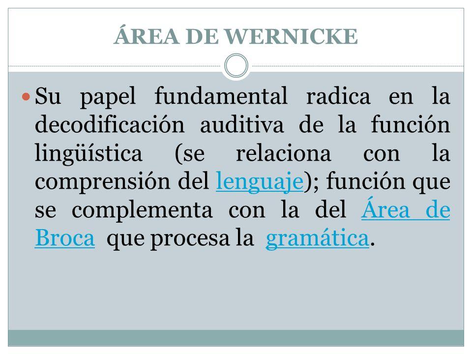 ÁREA DE WERNICKE