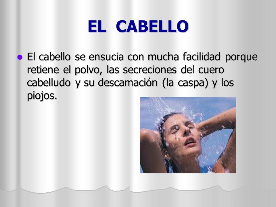 EL CABELLO
