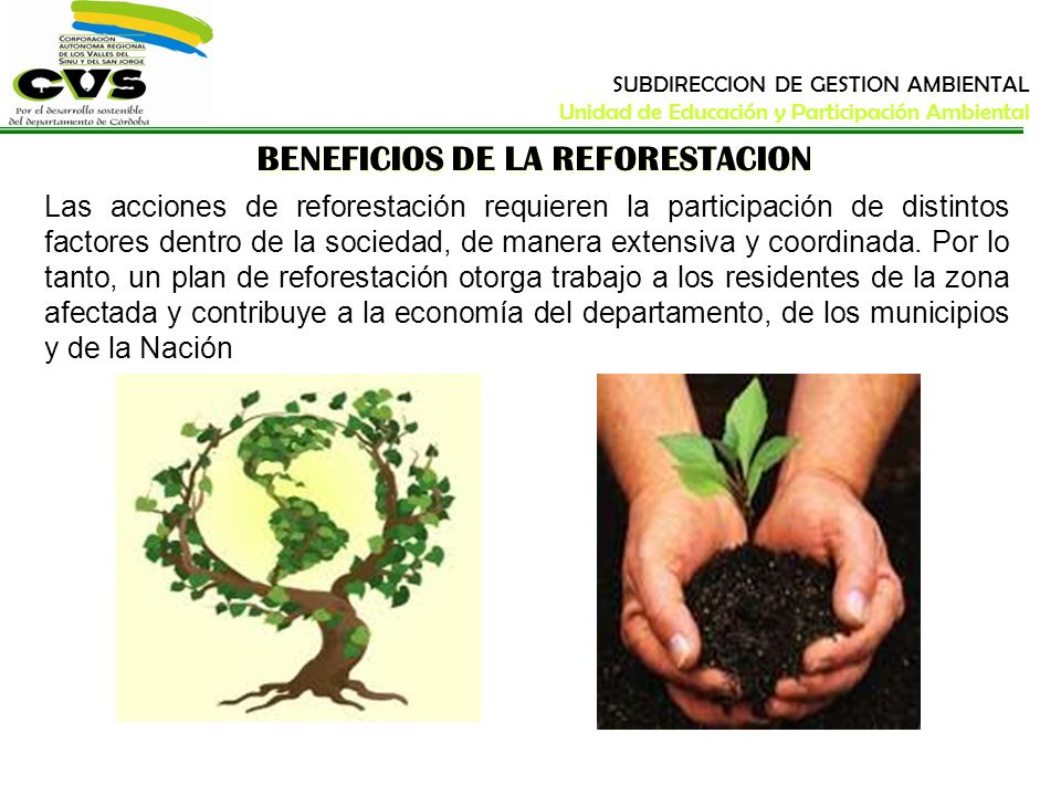 BENEFICIOS DE LA REFORESTACION