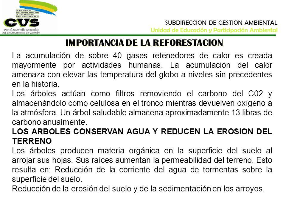 IMPORTANCIA DE LA REFORESTACION