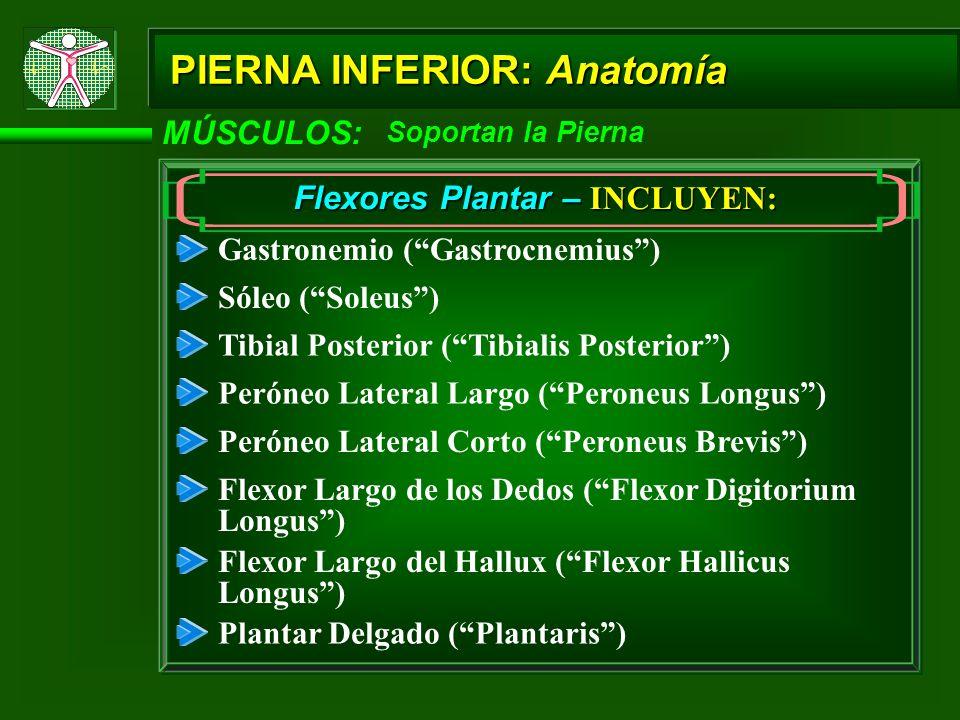 Flexores Plantar – INCLUYEN: