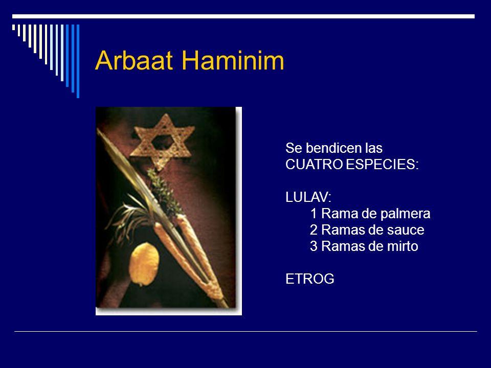 Arbaat Haminim Se bendicen las CUATRO ESPECIES: LULAV: