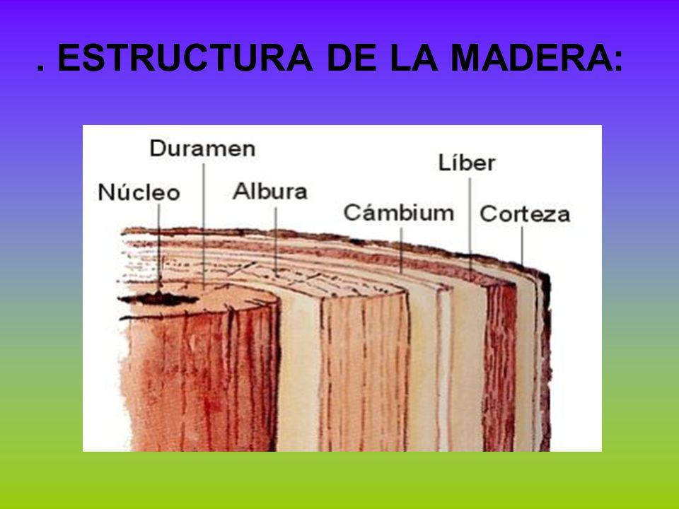 . ESTRUCTURA DE LA MADERA: