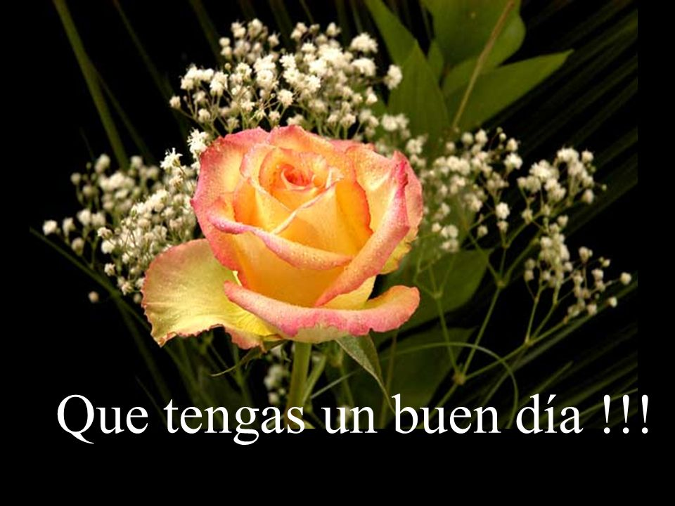 Que tengas un buen día !!!
