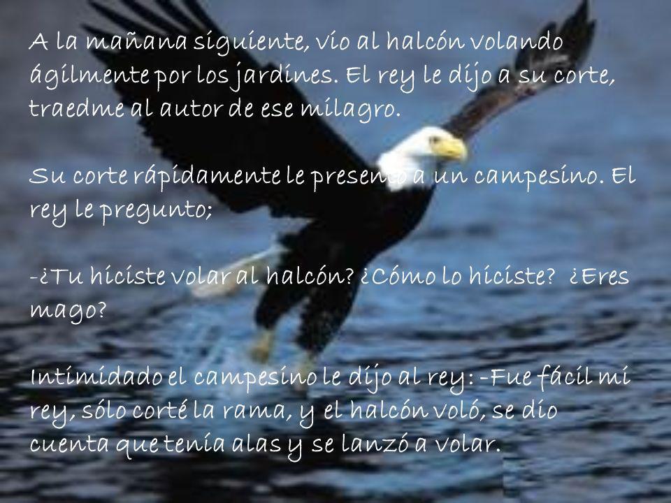 A la mañana siguiente, vio al halcón volando ágilmente por los jardines. El rey le dijo a su corte, traedme al autor de ese milagro.