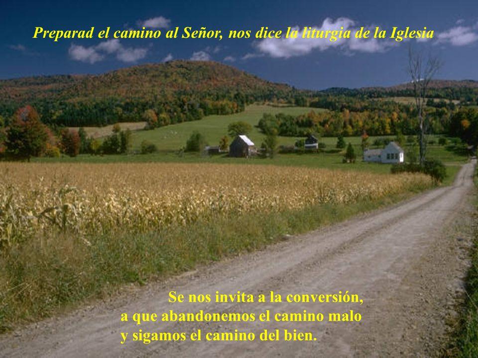 Preparad el camino al Señor, nos dice la liturgia de la Iglesia