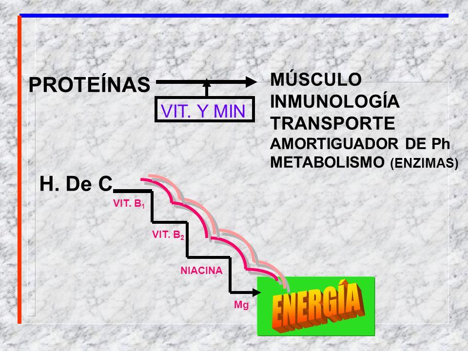 ENERGÍA PROTEÍNAS H. De C. MÚSCULO INMUNOLOGÍA TRANSPORTE VIT. Y MIN