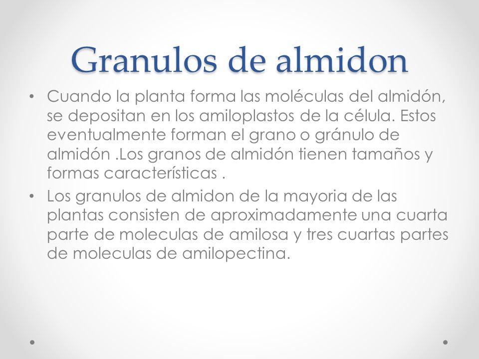 Granulos de almidon