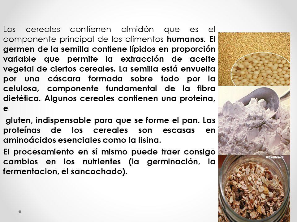 Los cereales contienen almidón que es el componente principal de los alimentos humanos. El germen de la semilla contiene lípidos en proporción variable que permite la extracción de aceite vegetal de ciertos cereales. La semilla está envuelta por una cáscara formada sobre todo por la celulosa, componente fundamental de la fibra dietética. Algunos cereales contienen una proteína, e