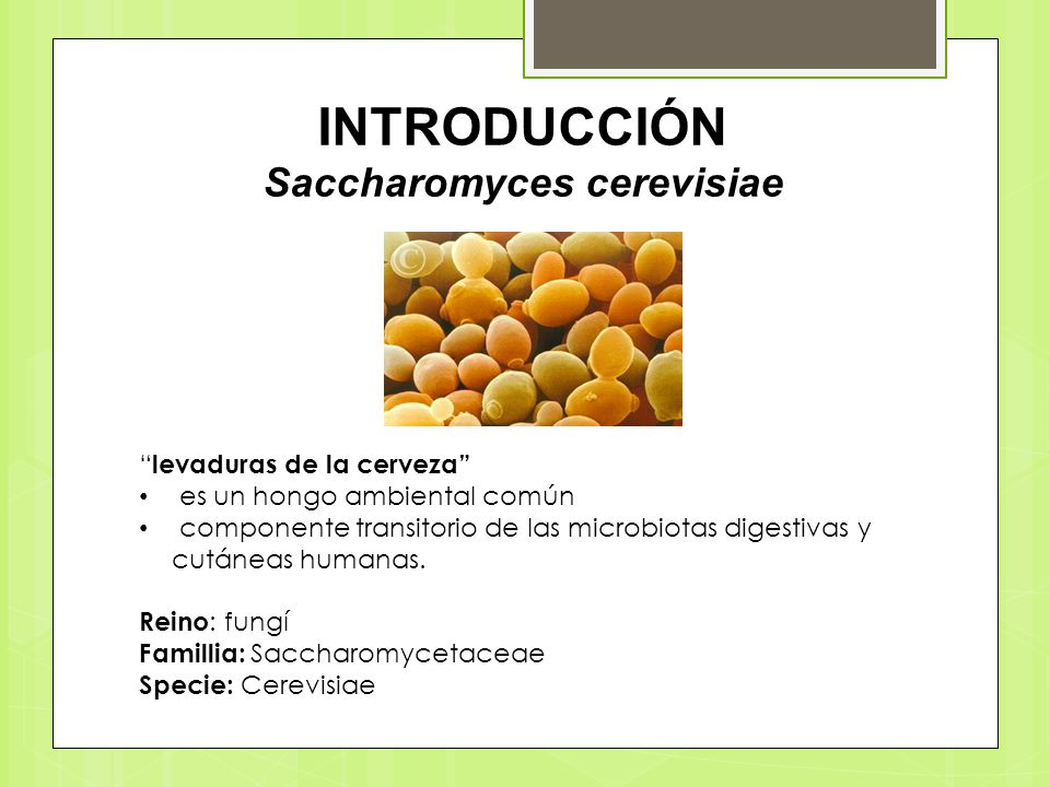 INTRODUCCIÓN Saccharomyces cerevisiae