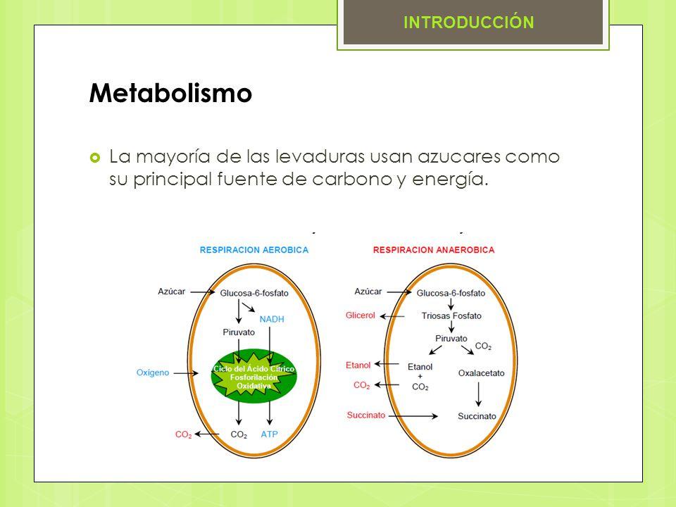 INTRODUCCIÓN Metabolismo.