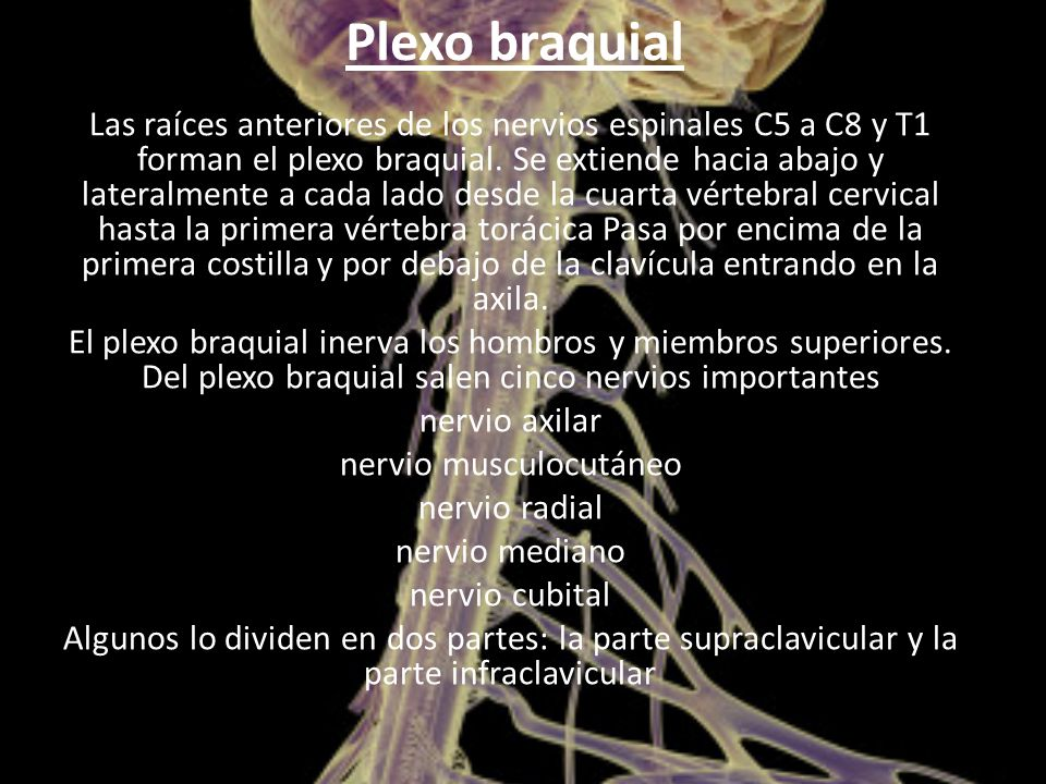 nervio musculocutáneo