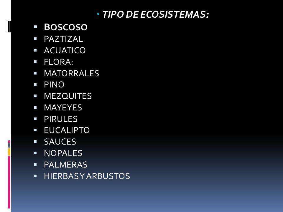 TIPO DE ECOSISTEMAS: BOSCOSO PAZTIZAL ACUATICO FLORA: MATORRALES PINO