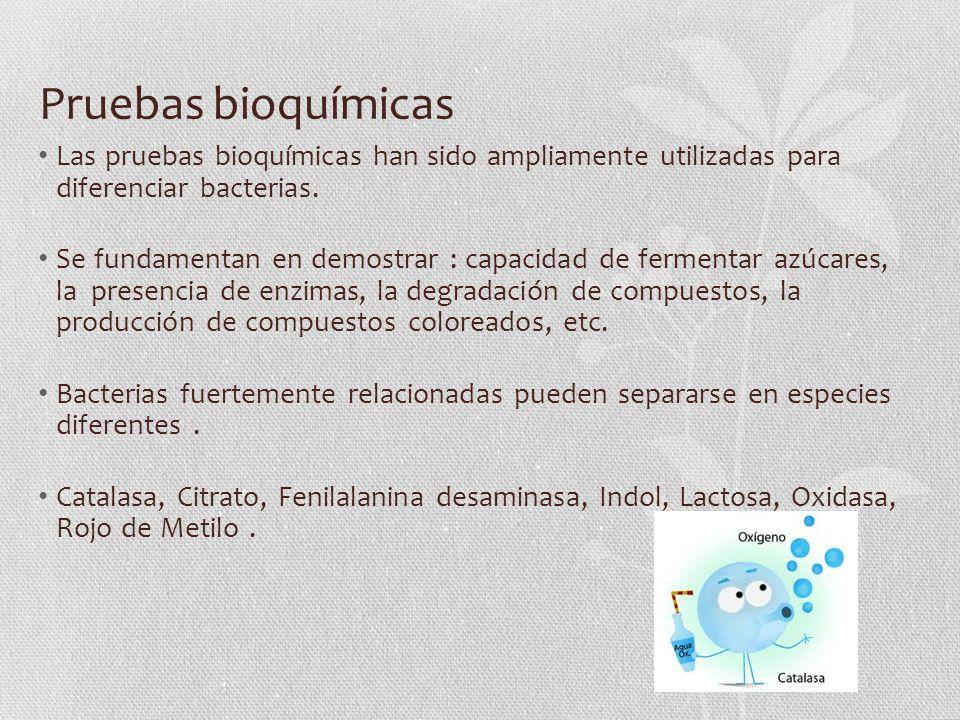 Pruebas bioquímicas Las pruebas bioquímicas han sido ampliamente utilizadas para diferenciar bacterias.