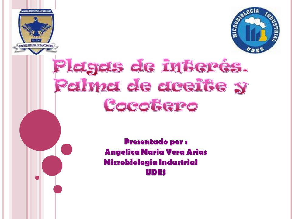 Angelica Maria Vera Arias Microbiologia Industrial