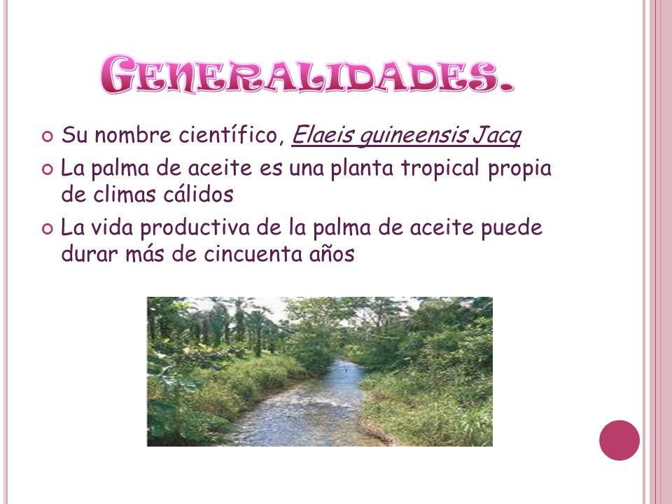 Generalidades. Su nombre científico, Elaeis guineensis Jacq