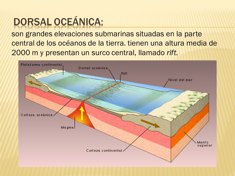 Dorsal oceánica: