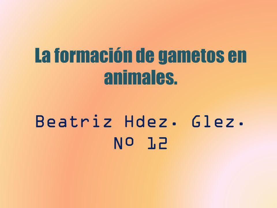 La formación de gametos en animales. Beatriz Hdez. Glez. Nº 12
