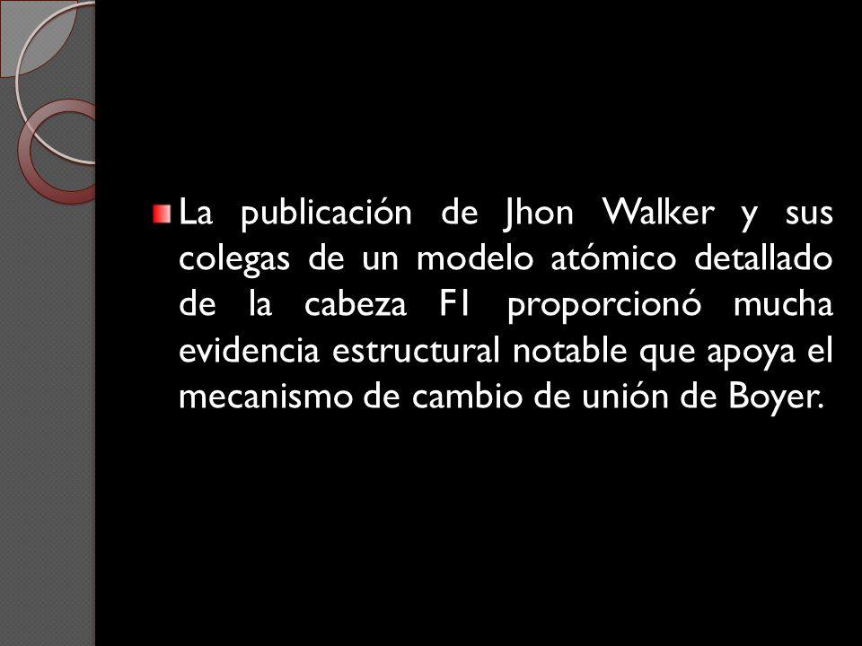 La publicación de Jhon Walker y sus colegas de un modelo atómico detallado de la cabeza F1 proporcionó mucha evidencia estructural notable que apoya el mecanismo de cambio de unión de Boyer.