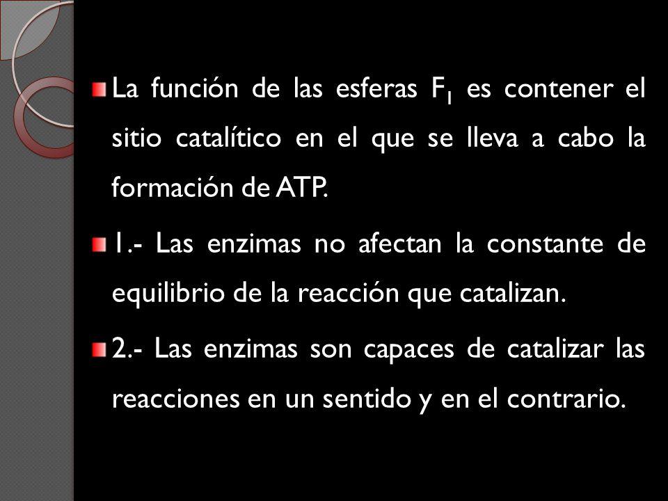 La función de las esferas F1 es contener el sitio catalítico en el que se lleva a cabo la formación de ATP.