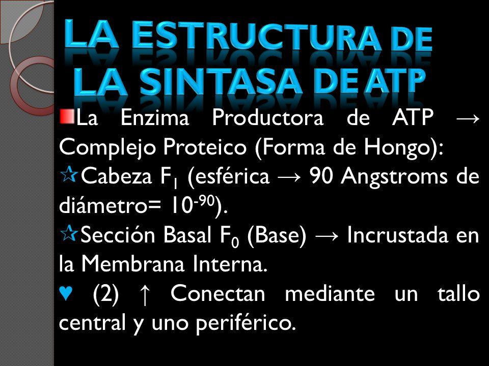 La estructura de la sintasa de atp