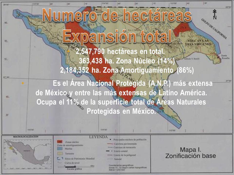 Numero de hectáreas Expansión total