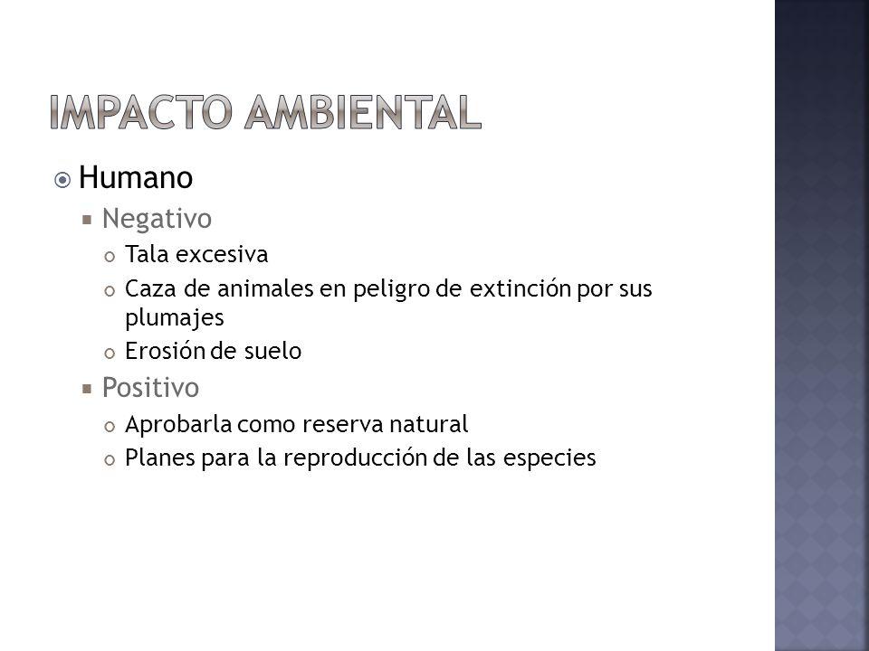 Impacto ambiental Humano Negativo Positivo Tala excesiva