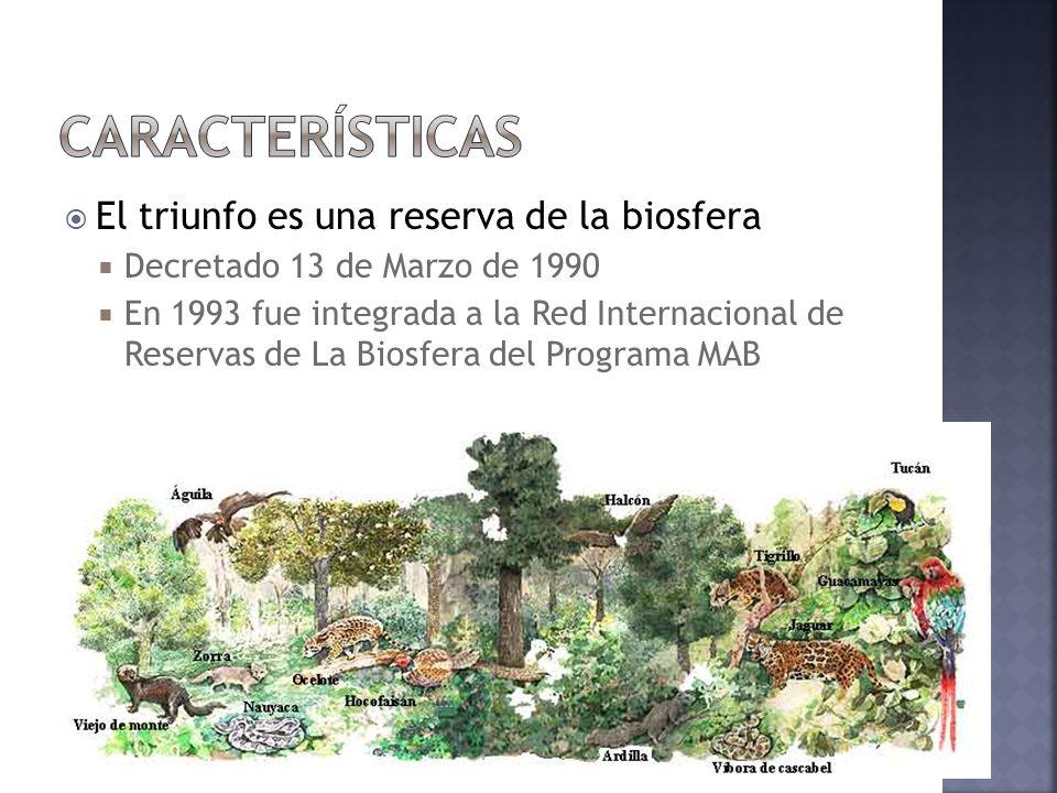 Características El triunfo es una reserva de la biosfera