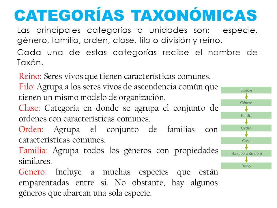 CATEGORÍAS TAXONÓMICAS