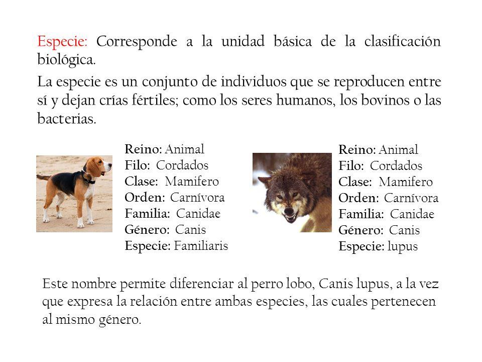 Especie: Corresponde a la unidad básica de la clasificación biológica.