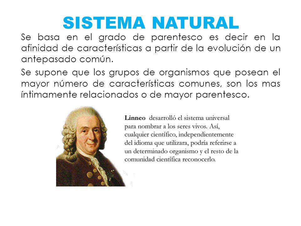 SISTEMA NATURAL Se basa en el grado de parentesco es decir en la afinidad de características a partir de la evolución de un antepasado común.